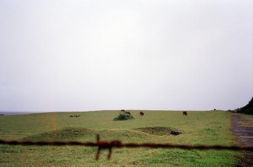 Da cows