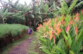 Mama walking thru mosquito alley